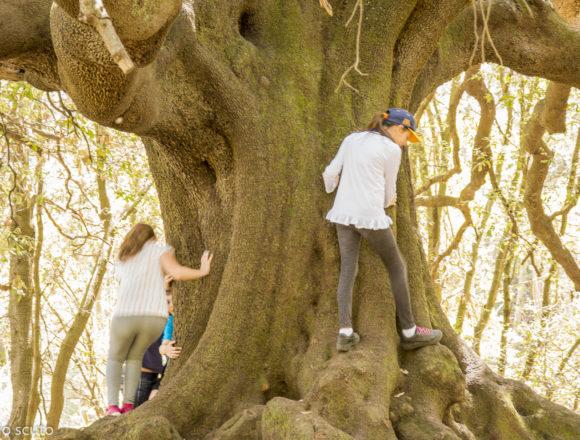 L'imponenza della quercia Pantano Ilice
