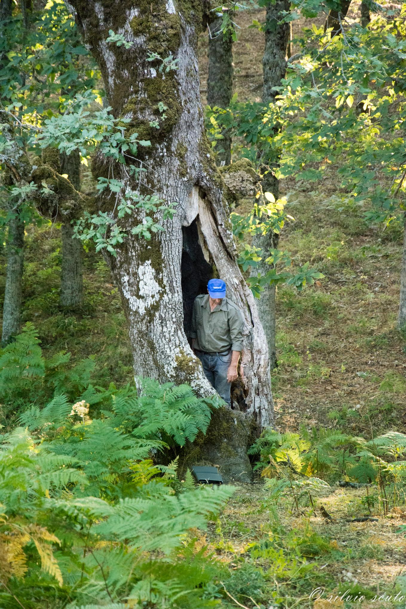 Una grande fessura in una quercia centenaria